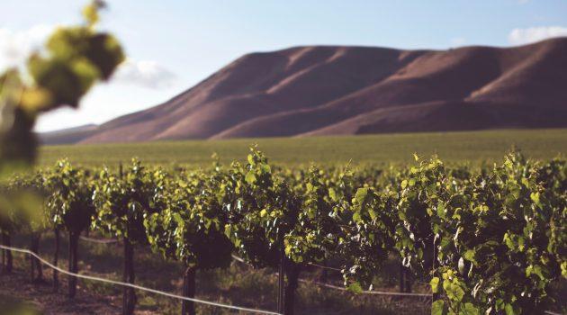"""Lecturas del día y reflexión del evangelio: 22 De Marzo 2019 - """"Cuando vuelva el dueño del viñedo, ¿qué hará con esos viñadores?"""""""