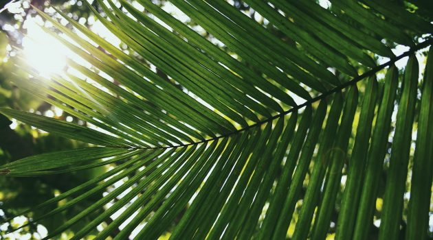 Palm Sunday Readings | April 14, 2019